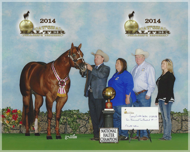 2014 FG Ambassador National Halter Champion