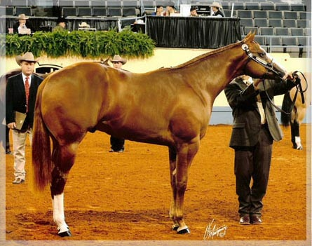 Very Cool 2009 AQHA World Show