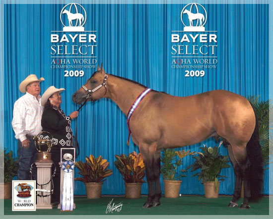 2009 AQHA BAYER SELECT WORLD CHAMPION SHOWN BY LINDA GORDON