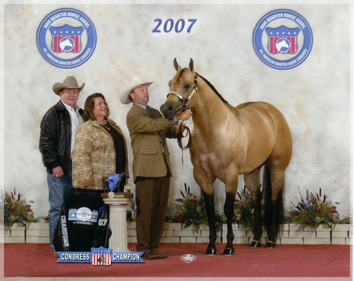 2007 AQHA CONGRESS CHAMPION 2 YR. OLD STALLIONS SHOWN BY ROSS ROARK