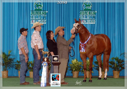 2010 AQHA World Champion 2 YO Stallion!! 1st place under four out of five judges!!